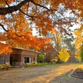 Beautiful Autumnal colours