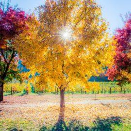 Autumn in Porepunkah